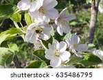 beautiful bee on the white... | Shutterstock . vector #635486795