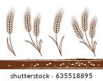 isolated hand drawn wheat ears... | Shutterstock . vector #635518895