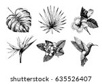 vector hand drawn tropical... | Shutterstock .eps vector #635526407