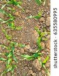 fertilizer on a field | Shutterstock . vector #635580995