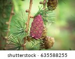 beautiful larch cones and... | Shutterstock . vector #635588255