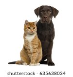 Stock photo dog and cat sitting isolated on white 635638034