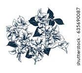 bougainvillaea flowers.... | Shutterstock .eps vector #635690087