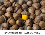 Small photo of colorful acorn against of ordinary acorns abstract vision be different, unique personality or standing out from the crowd, leadership quality. beautiful still life background
