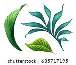 botanical illustration  floral... | Shutterstock . vector #635717195