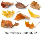 Isolated Leaves Collection....