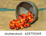 close up of fresh oil palm... | Shutterstock . vector #635755349