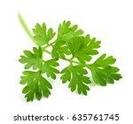 fresh chervil sprig isolated on ... | Shutterstock . vector #635761745