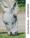 white horse eating grass in... | Shutterstock . vector #635845604