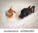 Stock photo cat and dog sleeping together on the cushion under the white blanket 635863385