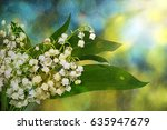 lily of the valley  convallaria ... | Shutterstock . vector #635947679