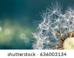 Close Up Of Dandelion Seeds On...