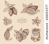 hand drawn illustration cocoa... | Shutterstock .eps vector #636031577