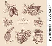 hand drawn illustration cocoa... | Shutterstock .eps vector #636031577