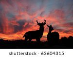 Buck And Doe Whitetail Deer...