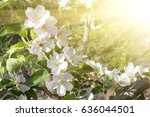beautiful bee on the white... | Shutterstock . vector #636044501