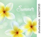 frangipani flowers background.... | Shutterstock .eps vector #636075935