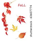 colorful autumn leaves   Shutterstock . vector #63607774