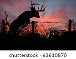 Buck Jumping Barved Wire Fence...