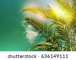 palm trees on the background of ... | Shutterstock . vector #636149111