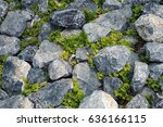 The Grey Limestones With The...