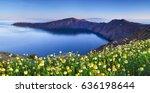 wildflowers on santorini | Shutterstock . vector #636198644