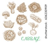 cabbages vegetables sorts... | Shutterstock .eps vector #636230909