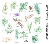 Spices And Herbs Sketches. Bay...