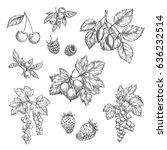berries sketch vector icons set.... | Shutterstock .eps vector #636232514