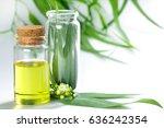 eucalyptus essential oils in... | Shutterstock . vector #636242354