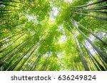 bamboo forest of arashiyama ... | Shutterstock . vector #636249824