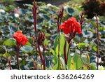 Red Flowers Macro At Bush Of...