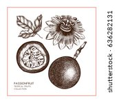dark purple passion fruit  hand ... | Shutterstock .eps vector #636282131