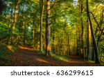 Small photo of Forest trail landscape