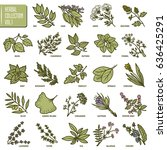 hand drawn vector set of herbs... | Shutterstock .eps vector #636425291
