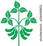 soybean plant vector... | Shutterstock .eps vector #636446801