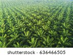 arial view of palm plantation... | Shutterstock . vector #636466505
