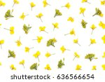 Rapeseed Flowers Isolated On...