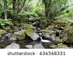 tropical forest stream  stones... | Shutterstock . vector #636568331