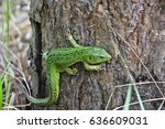 Green Lizard In The National...