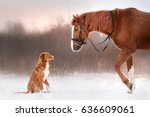 Red Horse And Red Dog Walking...
