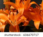 mix of spring flowers | Shutterstock . vector #636670717