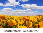 flock of migratory birds fly... | Shutterstock . vector #636680797