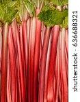 rhubarb full rose red...