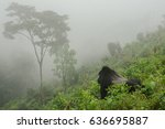 gorilla in the mist | Shutterstock . vector #636695887