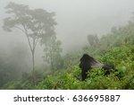 gorilla in the mist | Shutterstock . vector #636695887