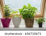 herbs growing in pot on kitchen ... | Shutterstock . vector #636710671