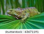 Iguana Perched On A Palm Frond