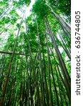 manoa falls trail hike oahu...   Shutterstock . vector #636744805