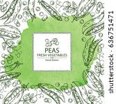watercolor background with peas ... | Shutterstock .eps vector #636751471